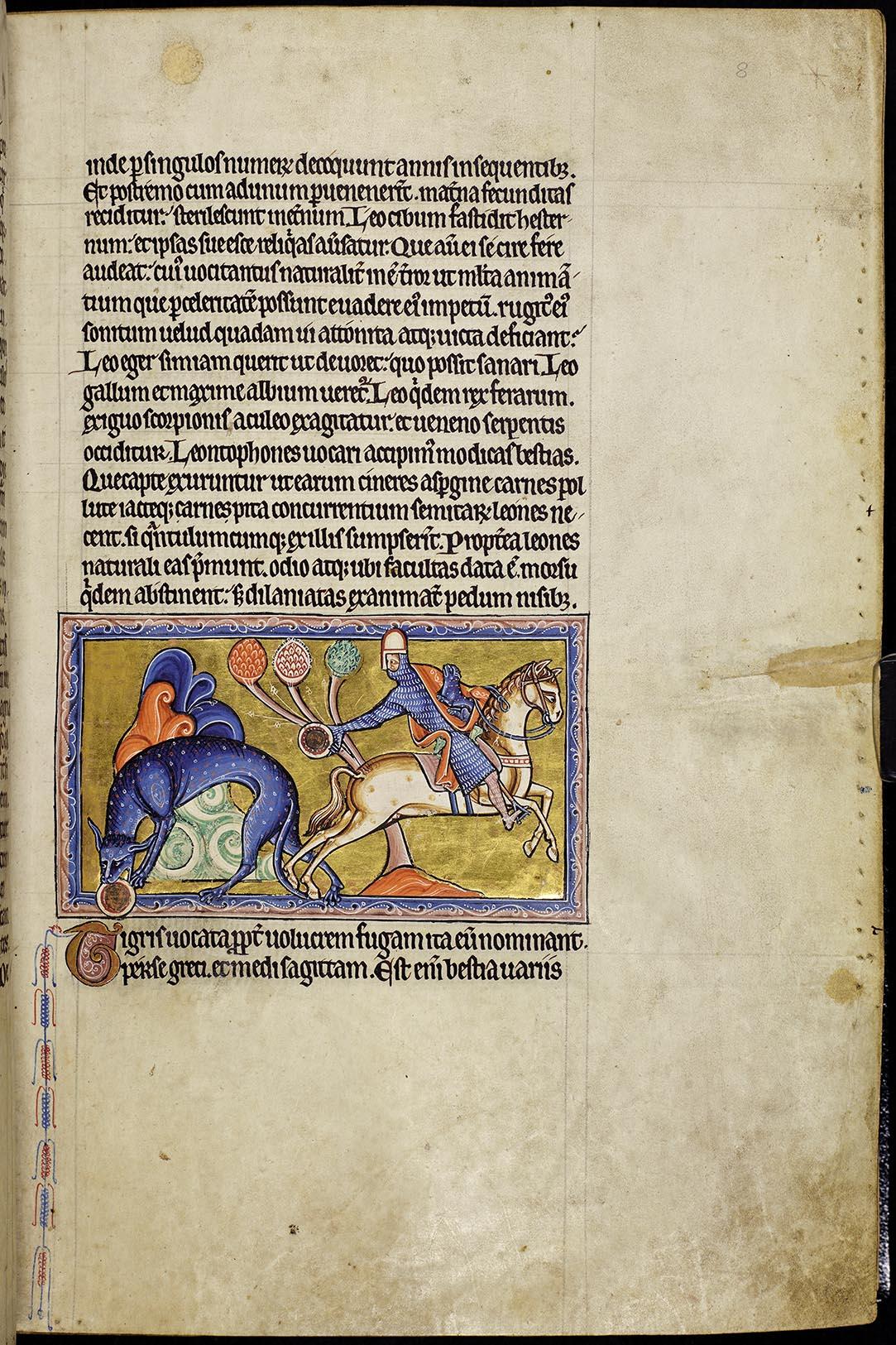 Aberdeen Bestiary, Folio 8r, Tiger, 12th century
