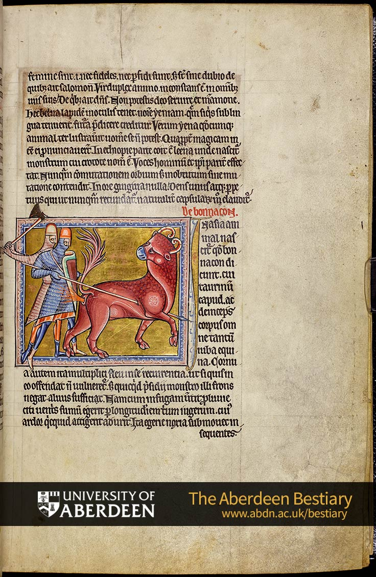 Folio 12r - Hyena, continued. De bonnacon; the bonnacon. | The Aberdeen Bestiary | The University of Aberdeen