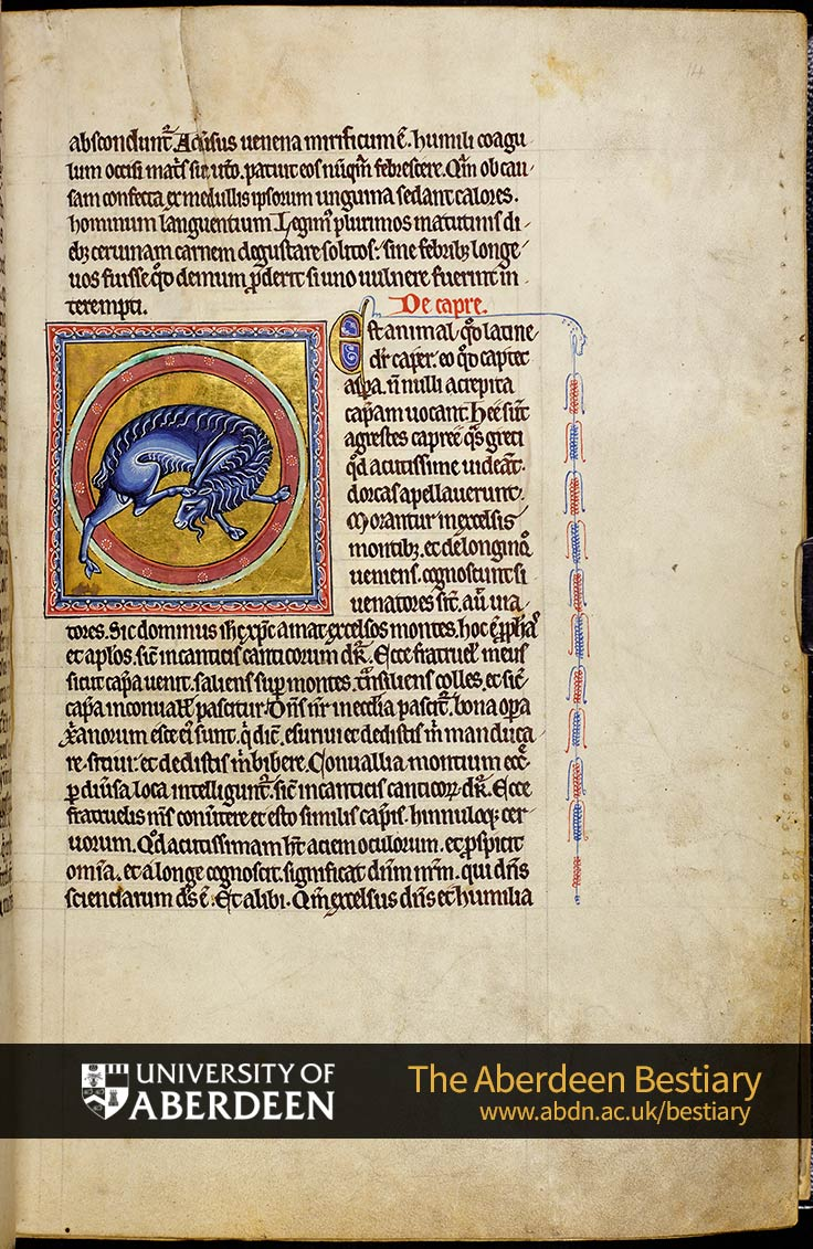 Folio 14r - Deer, continued. De capre; the goat. | The Aberdeen Bestiary | The University of Aberdeen