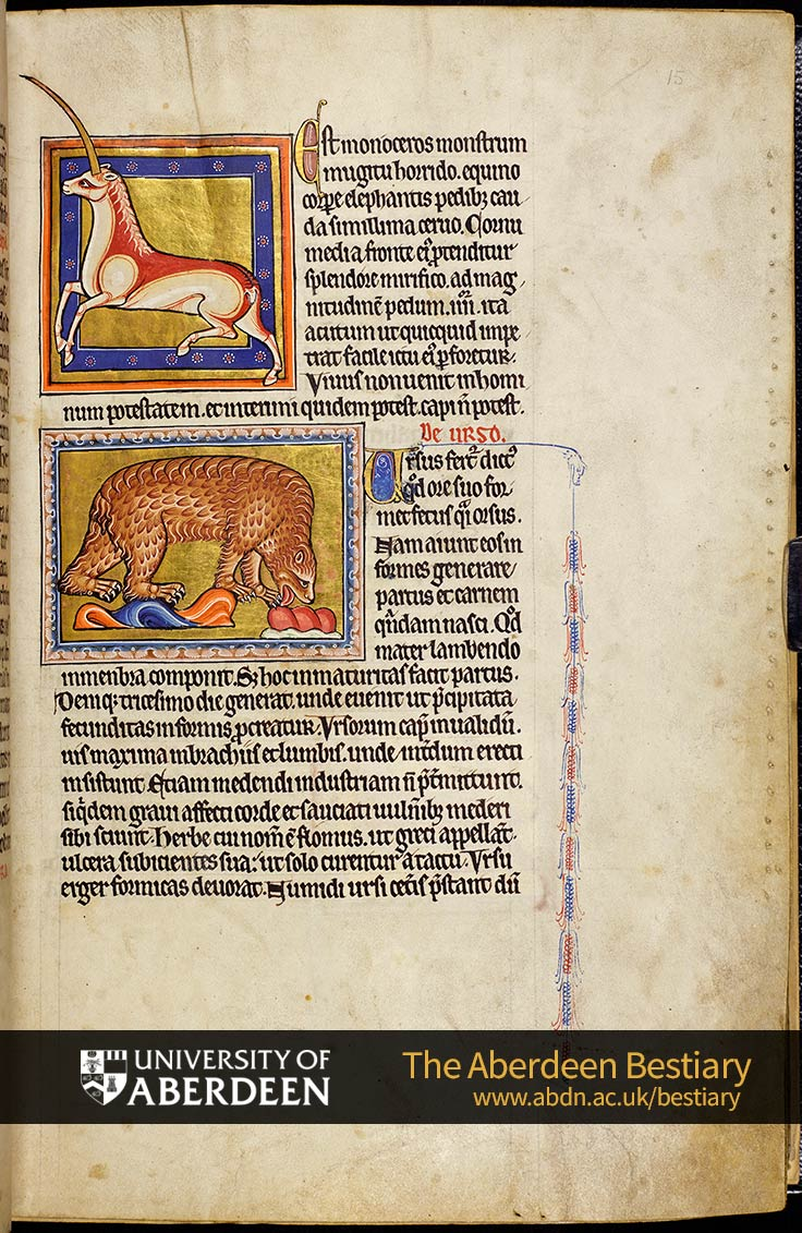 Folio 15r - De monocero; the monceros. De urso; the bear. | The Aberdeen Bestiary | The University of Aberdeen