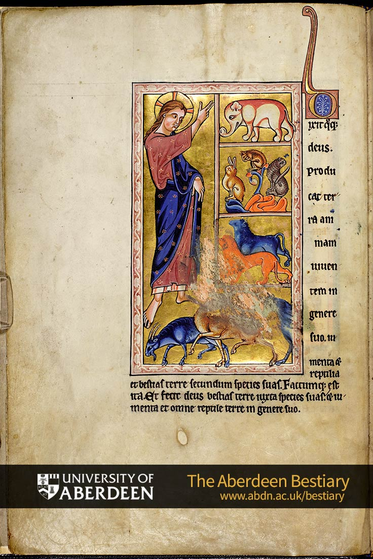 Folio 2v - Creation of the animals | The Aberdeen Bestiary | The University of Aberdeen