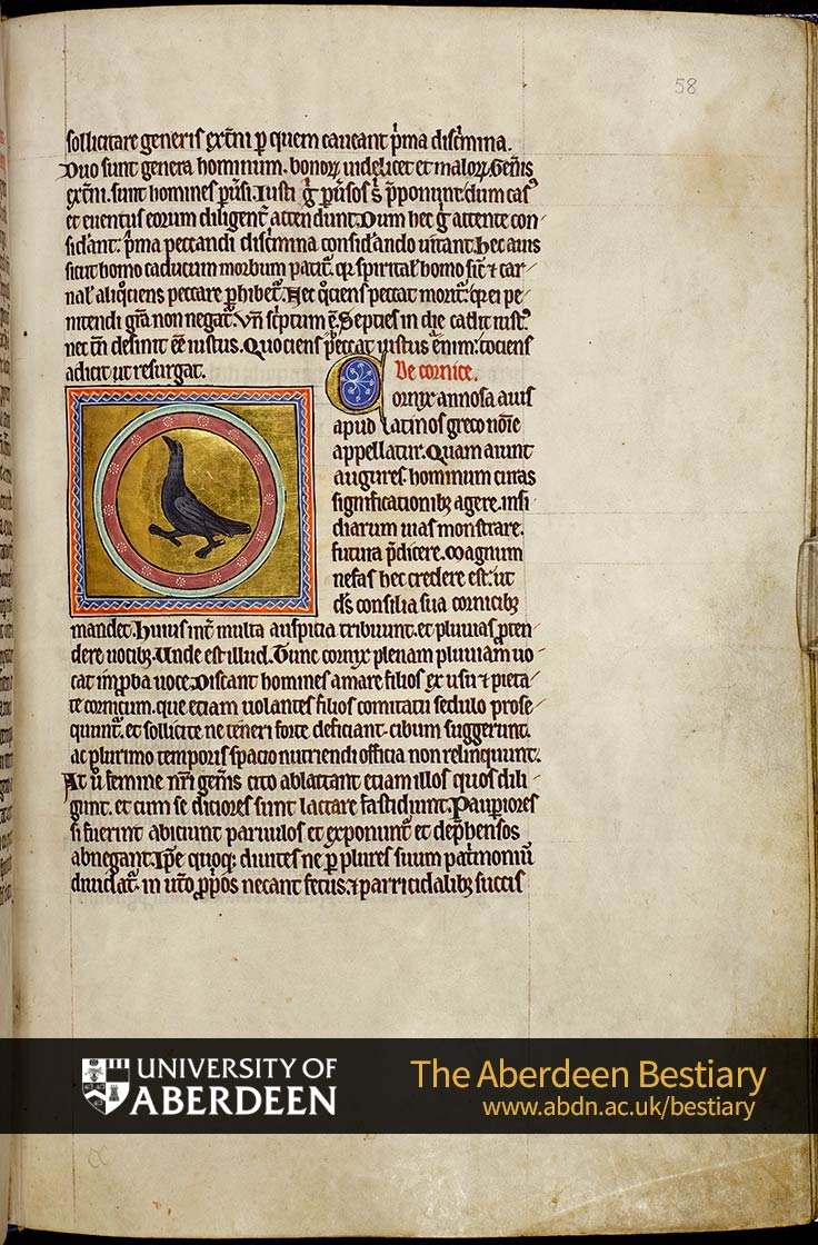 Folio 58r - the quail, continued. De cornice ; Of the crow | The Aberdeen Bestiary | The University of Aberdeen