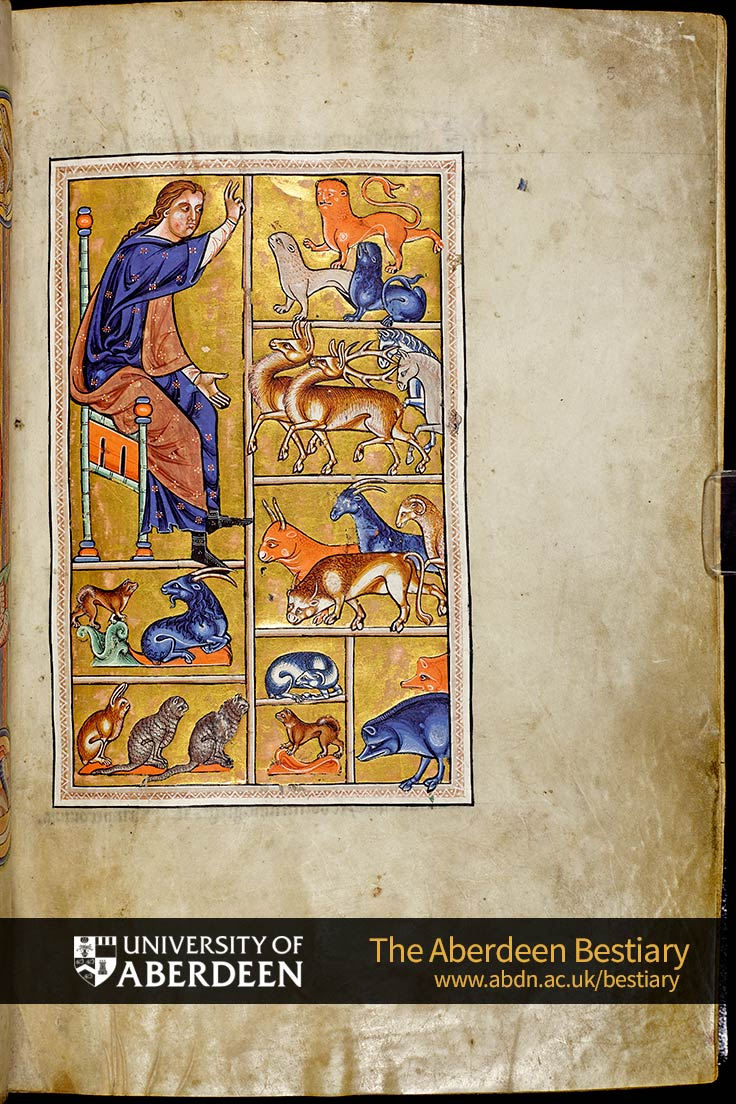 Folio 5r - Adam names the animals | The Aberdeen Bestiary | The University of Aberdeen
