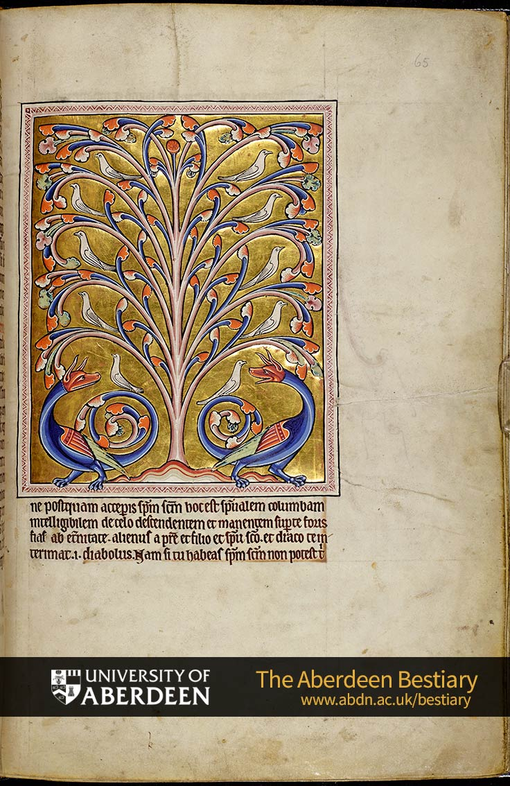 Folio 65r - the perindens tree, continued. | The Aberdeen Bestiary | The University of Aberdeen