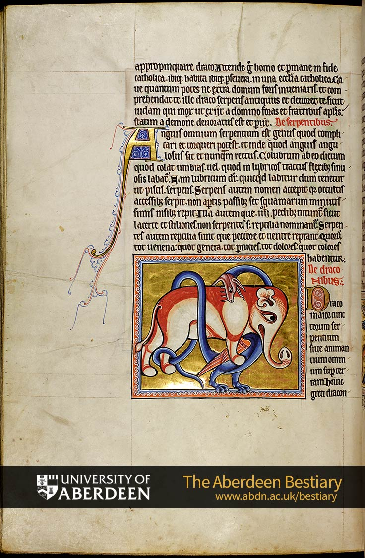 Folio 65v - De serpentibus; Of snakes. De draconibus; Of the dragon. | The Aberdeen Bestiary | The University of Aberdeen