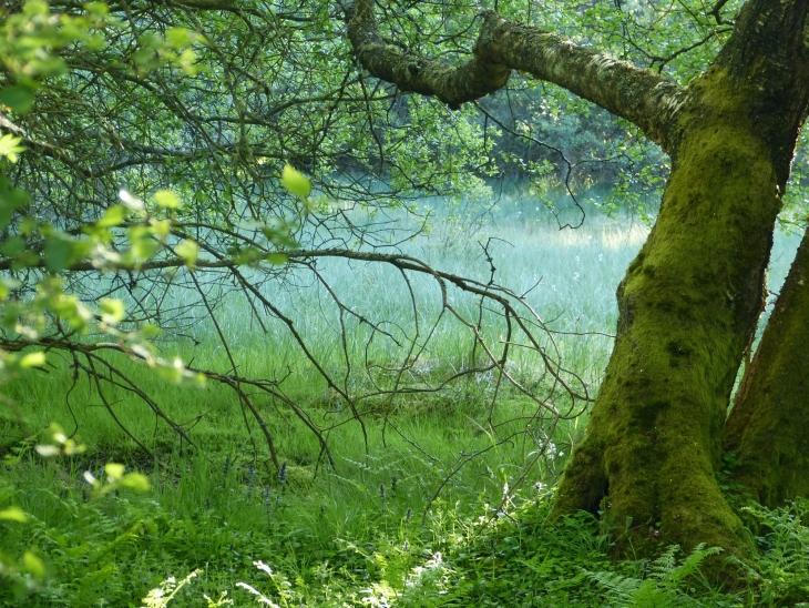 Colin Denholm - Scolty Woodland