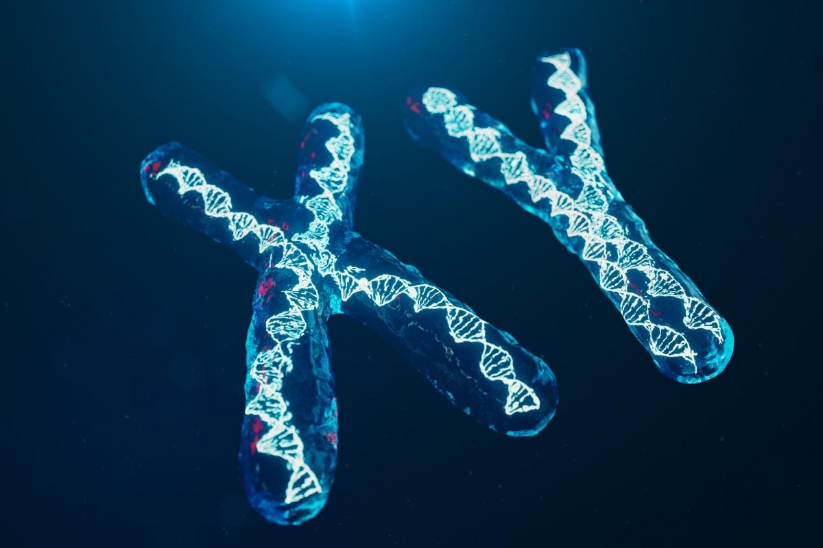 Xy Kromosomi