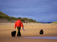 Man walking dogs on beach