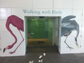 Walking with Birds exhibition