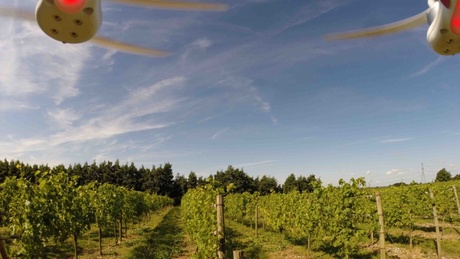 An image taken by an Unmanned Aerial Vehicle of a vineyard