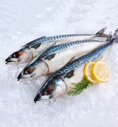 Scientists from the University of Aberdeen Rowett Institute are investigating whether eating mackerel could improve the health of South Asian diabetics.