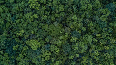 Actively restored tropical forests recover above ground biomass faster than areas left to regenerate naturally after being logged, according to new research