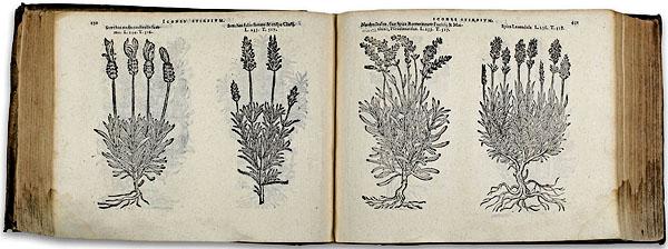 Christopher Plantin (ca. 1520–1589): Icones stirpium, seu plantarum tam exoticarum quam indigenarum.