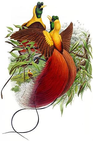 plate31_red_bird_paradise_copy.jpg