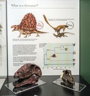 New display in Zoology Museum