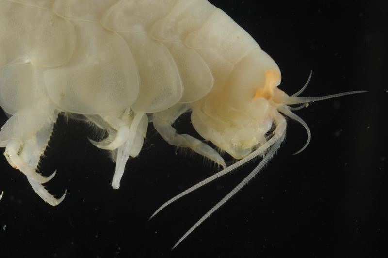 Scientists discover new species in one of world's deepest ...