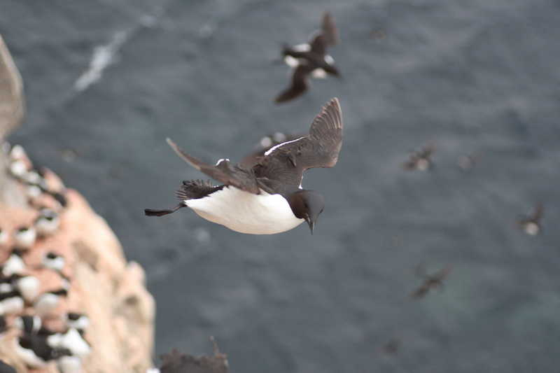 Penguins May Have Happy Feet But Why Don T They Fly