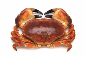 Scientists from the Rowett Institute will study the association between consumption of crab meat and health.