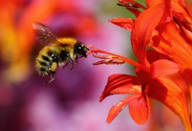 Get involved and help researchers find out which plants bumblebees like