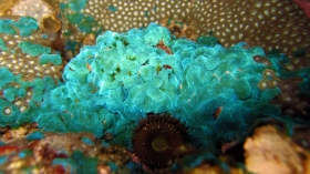 New drugs created using enzymes from reef-dwelling marine organisms form basis of new spin out company