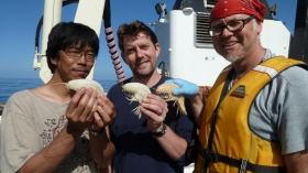 Toyo Fujii, Alan Jamieson (University of Aberdeen) and Ashley Rowden (NIWA) with the supergiant amphipods. Photo copyright of Oceanlab, University of Aberdeen, UK