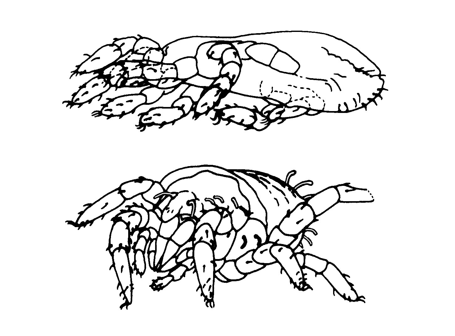 Arthropods Coloring Pages Coloring Pages