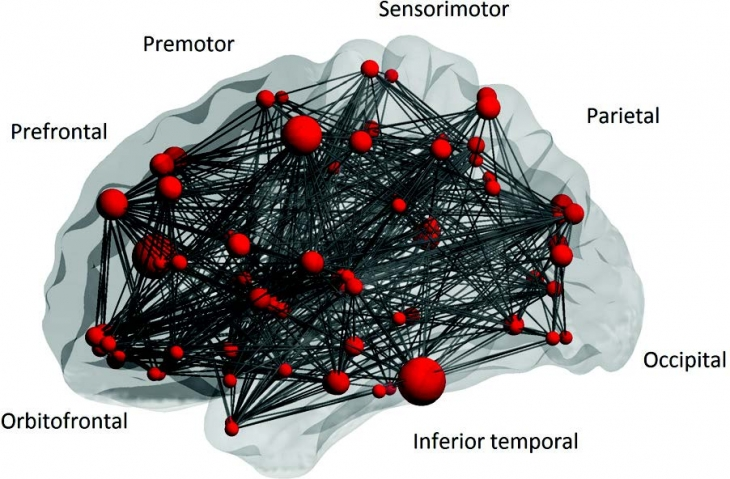 Visualization of brain functional networks