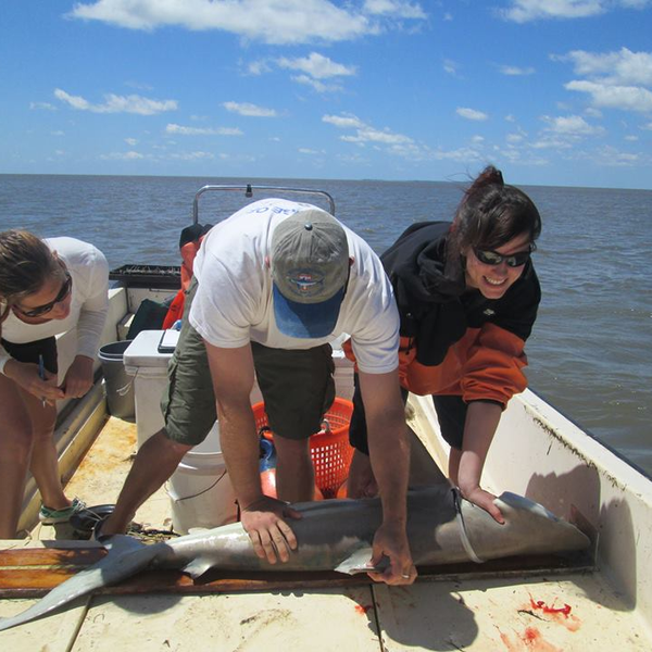Applied Marine and Fisheries Ecology | Postgraduate Taught